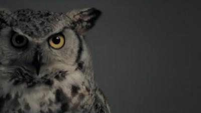 Primiceri Owl cc